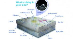 Mattress-Whats-Living-In-Your-Mattress